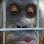 Assédio sexual com assobios e cantada na rua é 'mico'