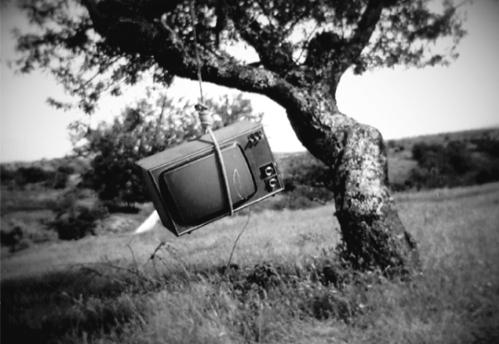 TV enforcada numa árvore