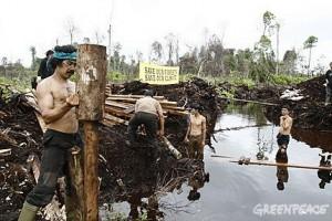 Greenpeace - destruição de florestas na Indonésia