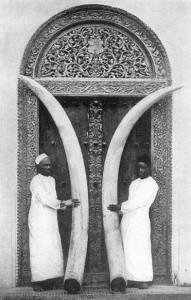 Marfim - presas de elefantes