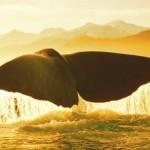 O mergulho da baleia no enfeite porta-canetas e peso de papel