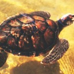 Ecologia: wallpapers de tartarugas marinhas