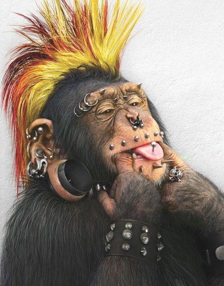 Macaco Punk