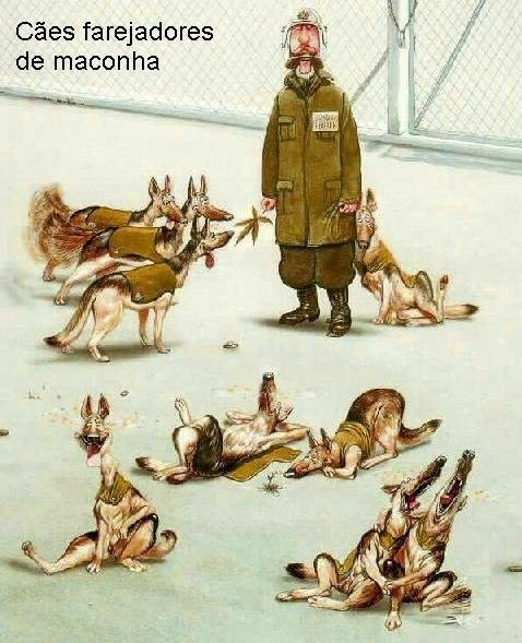 Cães policiais farejadores de drogas