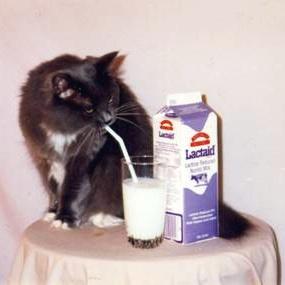 Gato bebe leite de canudinho