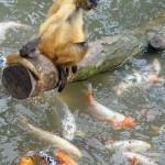 Fábula do peixe e do macaco: de bem intencionados o inferno…