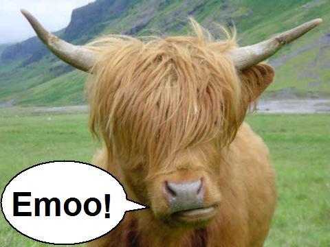 Emo-vaca - a vaca de franja