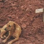 Imprensa fatura alto com falsa história do cachorro Caramelo