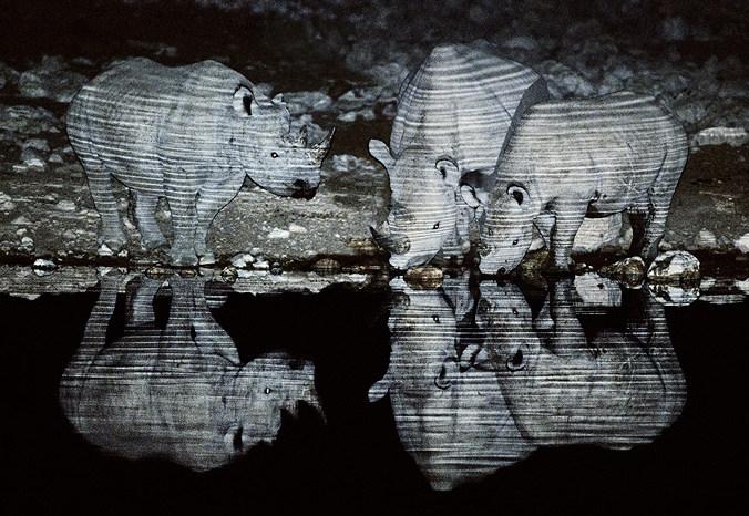 Rinocerontes bebendo água