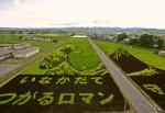 Tsunami - arrozal no Japão