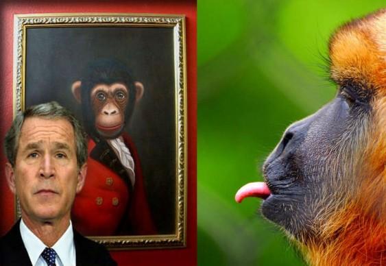 Macacos x Homens