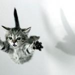 Levitação – descoberta nova capacidade esotérica dos gatos