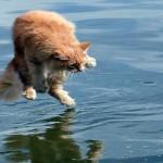 Gato entra de gaiato no navio e viaja 3.500 quilômetros