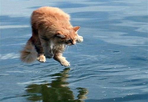 Gato - medo de água