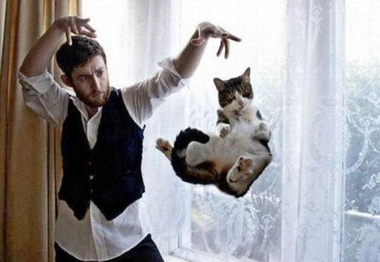 Truque de mágica felina