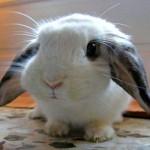 Fim da Páscoa: começa a temporada de 'descarte' dos mini coelhos