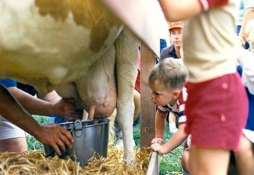 Leite de vaca para bebês humanos