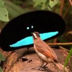 Mundo animal: um bicho muito estranho encarando o passarinho