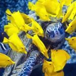 Tartarugas marinhas ameaçadas por química industrial e agrícola