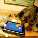 Vídeo do game com pescaria eletrônica para gatos no YouTube