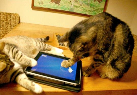 Inclusão digital para felinos