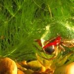 Aranhas evitam predadores vivendo em bolhas no fundo da água
