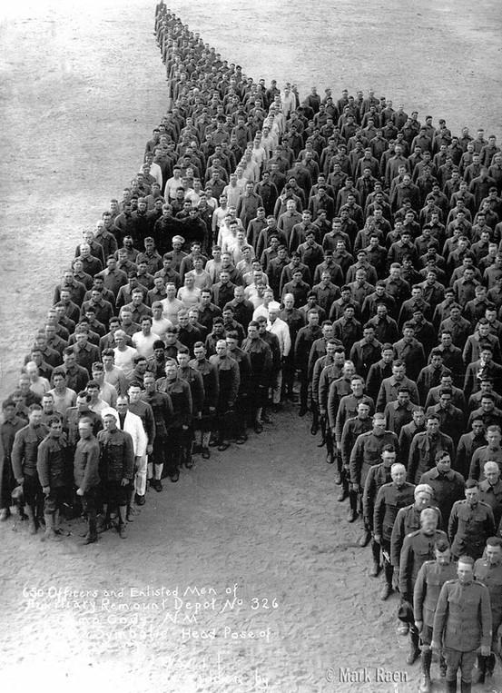 Cavalo - cabeça