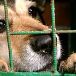 Cachorro acusado de ser reencarnação de advogado é condenado à morte