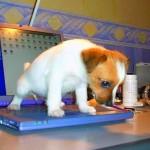 Cão perde o posto de melhor amigo do homem para o computador