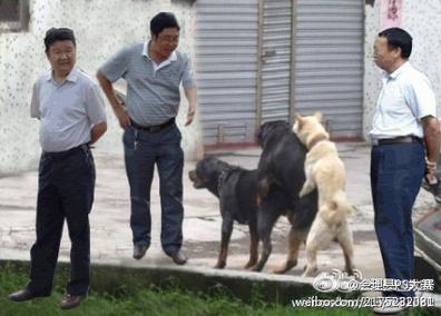 Cachorros transando e os chineses