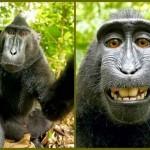 Macaco rouba máquina fotográfica, faz caretas e tira fotos suas rindo