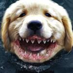 Vídeo do cachorro que mergulha e morde tubarão debaixo d'água