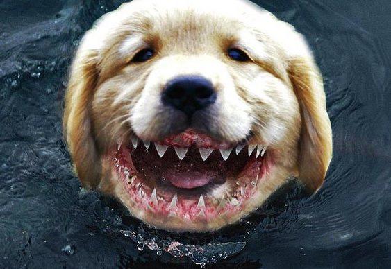 Cachorro mordendo tubarão
