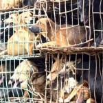 Tradicional banquete com carne de cachorro é proibido na China