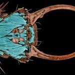Nikon Small World – fotos ampliadas do mundo microscópico