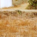 Ilusão de ótica, parlenda e camuflagem: o gato invisível
