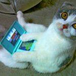 Sucesso do vídeo com gato que declara guerra a uma impressora