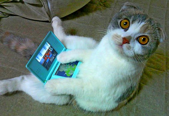 Gato brinca com videogame