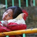Ritual com matança de animais em festival religioso no Nepal