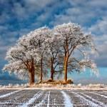 Árvores em campo coberto de neve ganham concurso de fotos