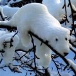 O urso polar parece que é branco por uma ilusão de ótica