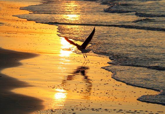 Gaivota na praia