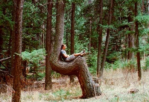 Descanso em tronco de árvore