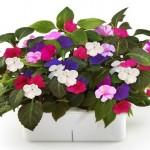 Vaso eletrônico para quem não tem tempo de cuidar das plantas