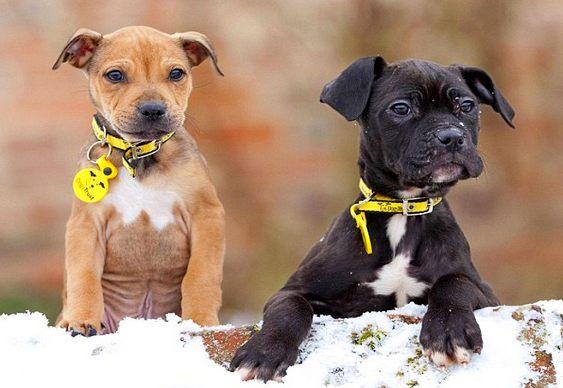 Cachorros abandonados