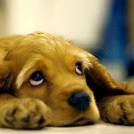 Cachorro também é (quase) gente, comprova pesquisa científica