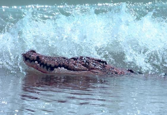 Pegar jacaré na praia
