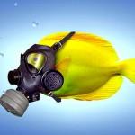 Temperatura do mar aumenta e peixes diminuem de tamanho