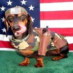 Fábula do cachorro americano revela manipulação da velha mídia