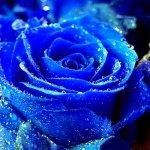 Viagra levanta flores murchas e Taron anima as mulheres